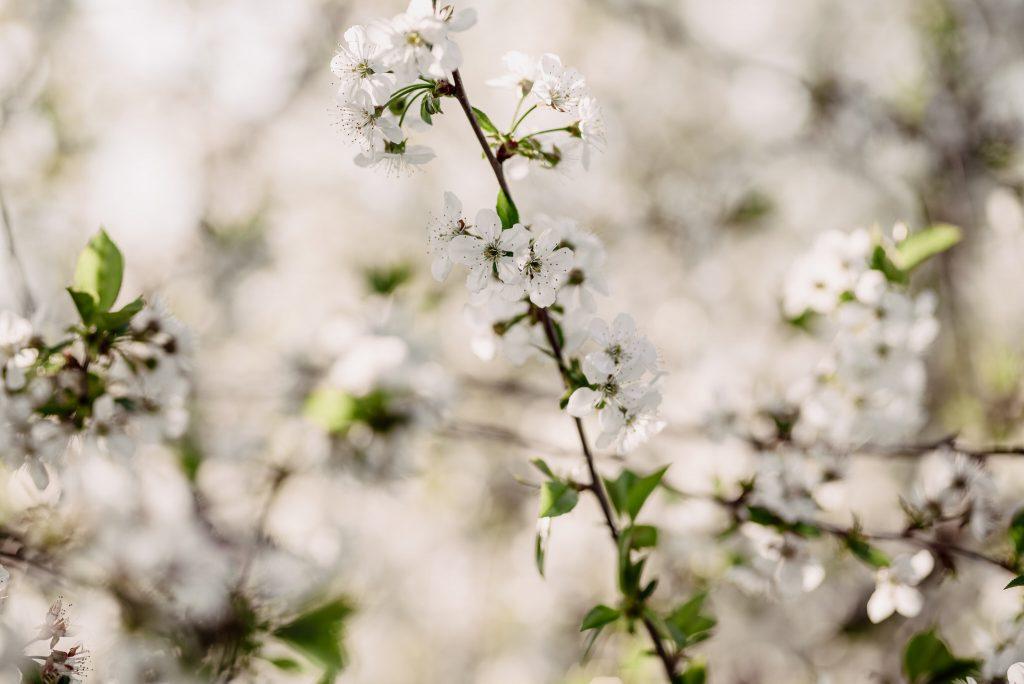 White and Light - Wiosenna sesja ciążowa, Rzeszów - Sesja ciążowa Rzeszów, Sady Albigowa - White and Light
